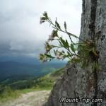 Поход по Карпатам: Чудо закарпатских земель — хребет Мармарош / 7 дней, 73 км