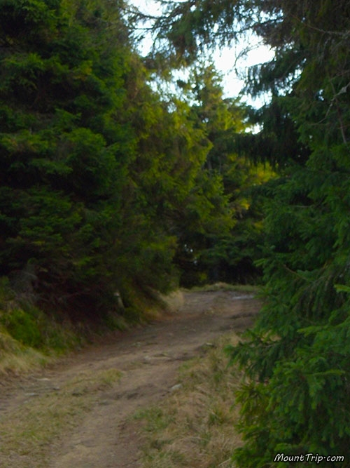 Тур Карпатами с MountTrip